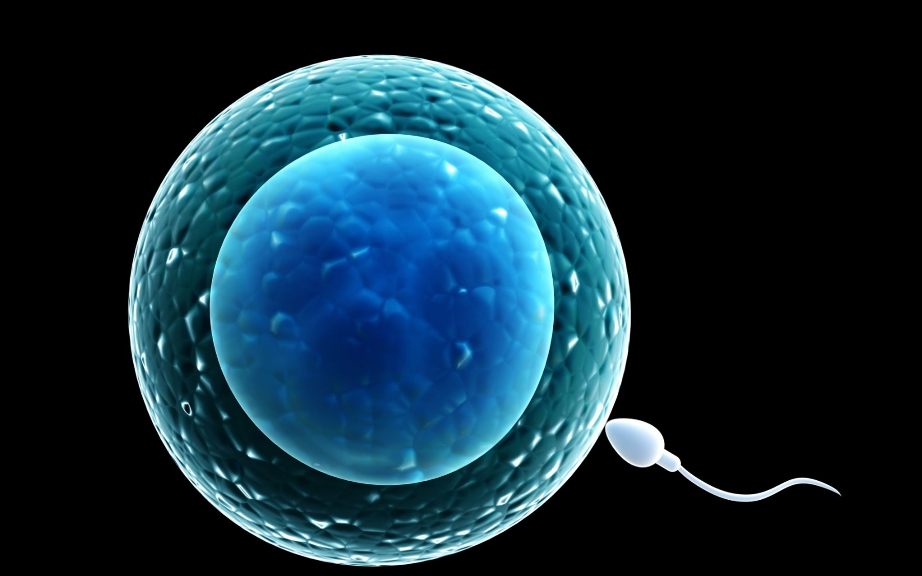 Male Fertility - The last two months